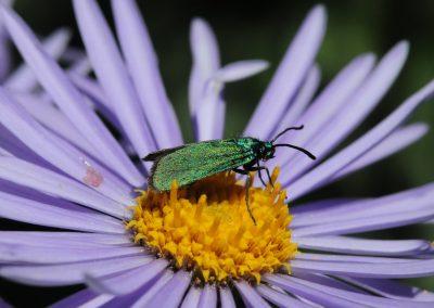 Anne Thebault - insecte dans une fleur