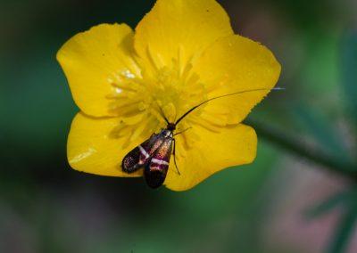 Anne Thebault - Insecte sur une fleur