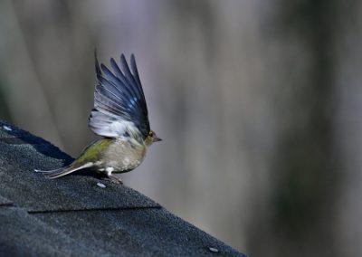 Anne Thebault - oiseau