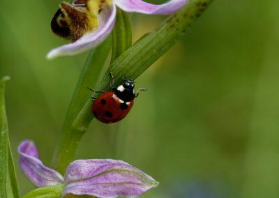 Anne Thebault - fleurs et insecte