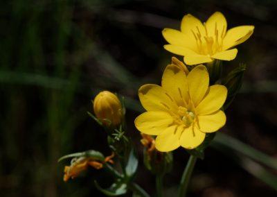 Anne Thebault - fleurs